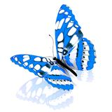 Бабочка. Стоковая Фотография RF