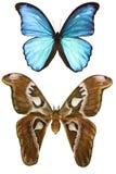 Бабочка 2 Стоковое Изображение