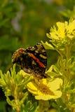 Бабочка 1 Стоковые Фотографии RF