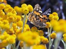 бабочка 01 Стоковые Фотографии RF