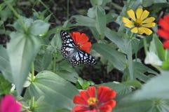 Бабочка 011 Стоковые Изображения RF