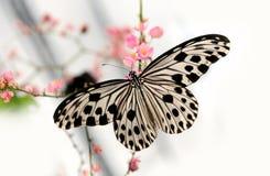 бабочка стоковые изображения rf