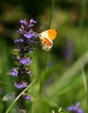 бабочка Стоковое Фото