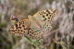 Бабочка 2 Стоковые Фотографии RF