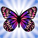 бабочка 8 Стоковые Изображения