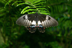 бабочка 9 Стоковое Фото