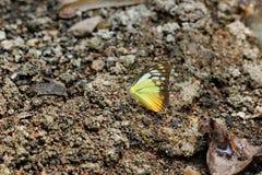 Бабочка Стоковые Фото