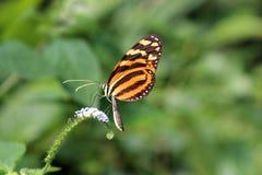 Бабочка angoras Знание природы Через глаза природы стоковые изображения