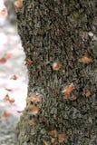 Бабочка angoras Знание природы Через глаза природы стоковая фотография