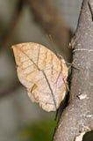 Бабочка Brown на коричневой ветви Стоковые Фото