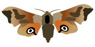 бабочка eyed сумеречница хоука Стоковая Фотография RF