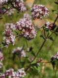 Бабочка Hairstreak Бело-письма Стоковое фото RF