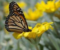 бабочка ii Стоковое Изображение