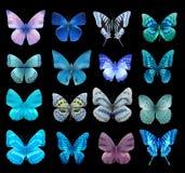 Бабочка Nith Стоковое Изображение