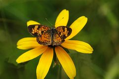 бабочка no9 Стоковое Изображение