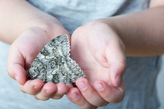 Бабочка silkmoth в child' руки s - Lymantria dispar Стоковое фото RF