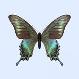 Бабочка Swallowtail - Papilio Maackii Стоковая Фотография