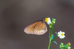Бабочки, бабочка Стоковые Фото
