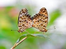 Бабочки в влюбленности Стоковое Изображение