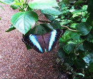 Бабочки в парнике Стоковое Изображение RF