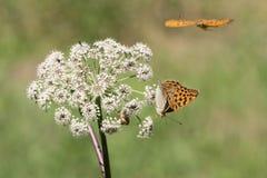Бабочки в природе Стоковые Фотографии RF