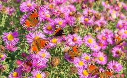 Бабочки в саде Стоковые Изображения RF