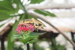 Бабочки в саде бабочек Стоковые Фотографии RF