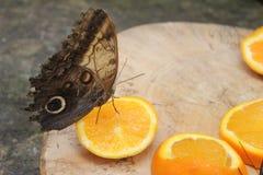 Бабочки в саде бабочек Стоковое Фото