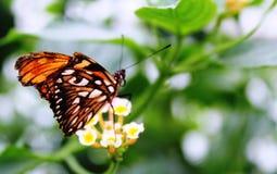 Бабочки в саде бабочек Стоковые Изображения RF