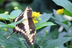 Бабочки в саде бабочек Стоковое Изображение