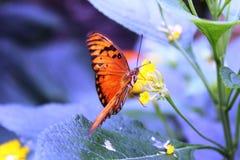 Бабочки в саде бабочек Стоковые Изображения