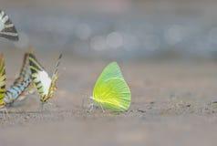 Бабочки в саде Стоковые Изображения