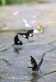Бабочки в симпатичном саде Стоковая Фотография RF