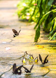 Бабочки в симпатичном саде Стоковые Фотографии RF