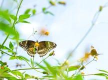 Бабочки в симпатичном саде Стоковое фото RF