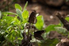 Бабочки в траве Стоковые Изображения