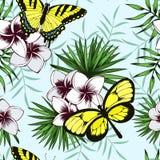 Бабочки в тропических джунглях E бесплатная иллюстрация