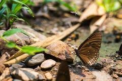 Бабочки есть соль Стоковая Фотография