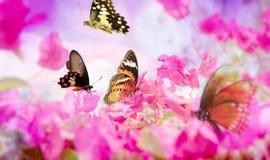 Бабочки летая в цветки Стоковые Фото