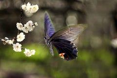 бабочки летая в цветок Стоковые Фото