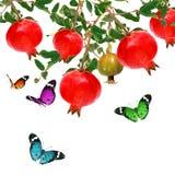 Бабочки летая и плодоовощ гранатового дерева Стоковое Фото