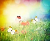Бабочки летая на луг цветка Стоковое Изображение RF