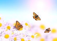 Бабочки летая над цветками Стоковые Фото
