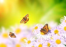 Бабочки летая над цветками Стоковые Фотографии RF