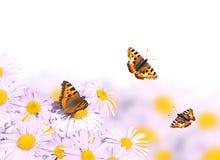 Бабочки летая над цветками Стоковые Изображения