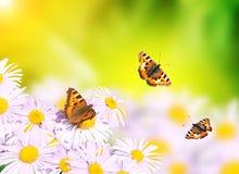 Бабочки летая над цветками Стоковая Фотография RF