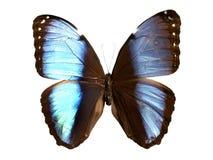 бабочки изолировали Стоковая Фотография