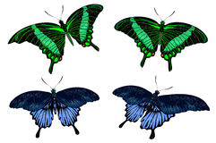 Красивейшие изолированные зеленые и голубые бабочки Стоковые Фото