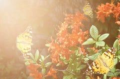 Бабочки и красный рододендрон в саде Стоковые Фотографии RF