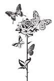 Бабочки и подняли Стоковое Изображение RF